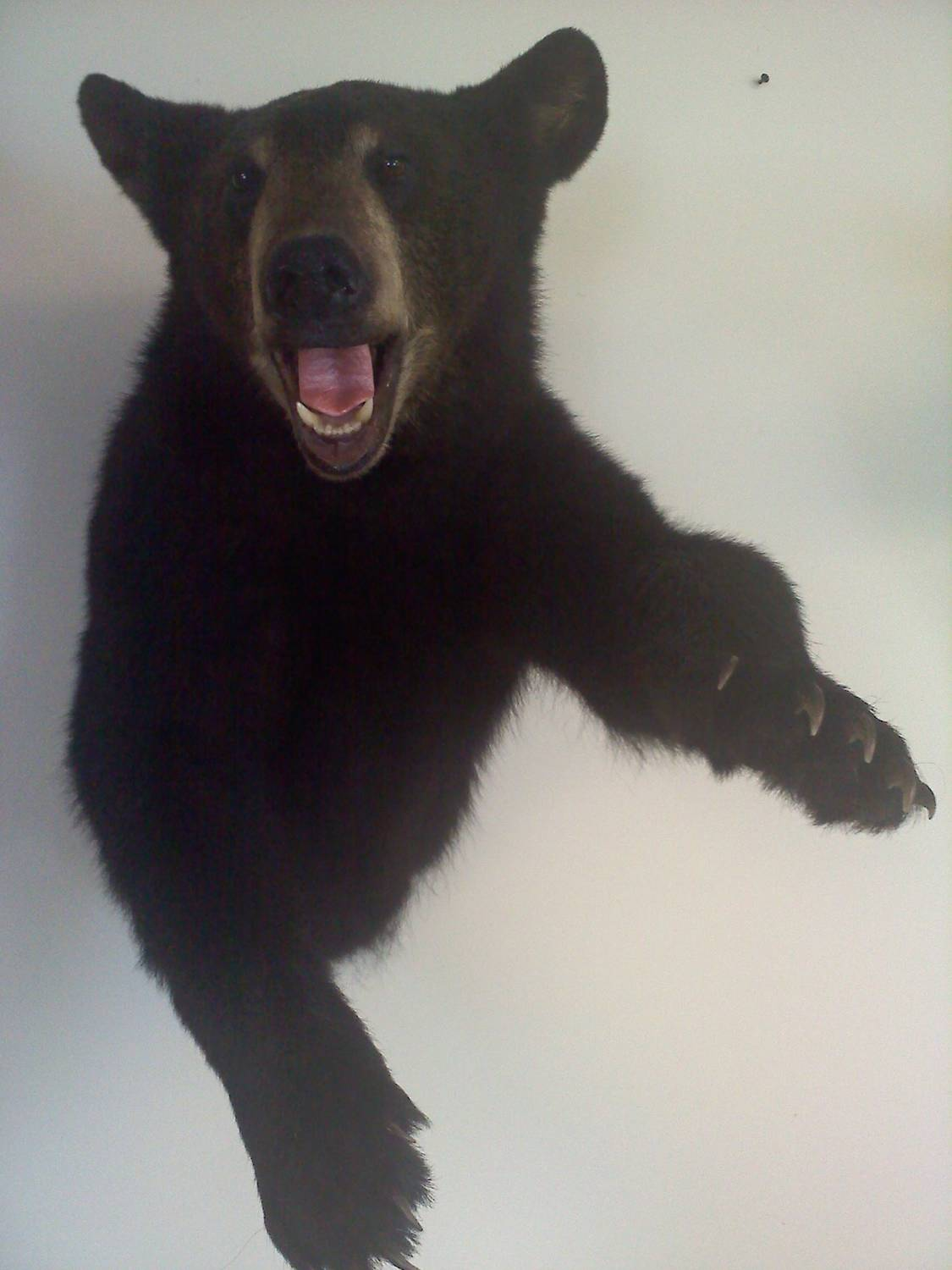 Frank Peters black bear