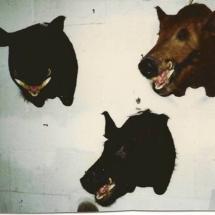 3 Wild Boar