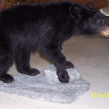 Black Bear on rock base