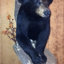 Black bear with habitat