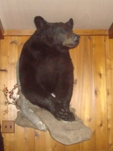 Bob Mishkula Canadian Black Bear