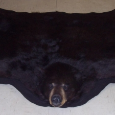 Closed mouth black bear rug 2
