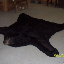Closed mouth black bear rug