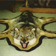 Coyote Rug2