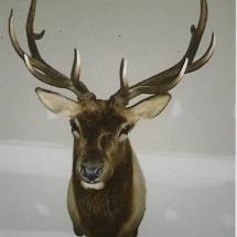 Ed Kochanski Elk
