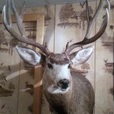 Frank Bogumil Mule Deer