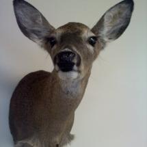 Frank Domoracki Daughters 1st Deer