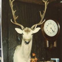 Frank Wieziolowski Fallow Deer