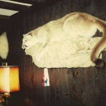 Frank Wieziolowski Mt Lion1