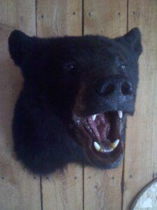 Fuller Black Bear