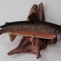 Keith Hallock Brown Trout #1