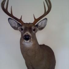 Kevin Sudol NY Buck
