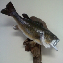 Kulick Largemouth Bass