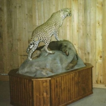 Leopard & Baboon