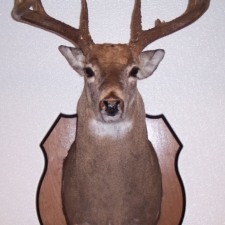 Mark Mitchko Whitetail