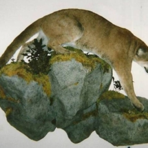 Mountain Lion3