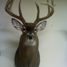 Paul Carlow Maine Whitetail