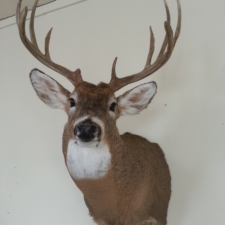 Robert Pfleckl S Dakota Whitetail