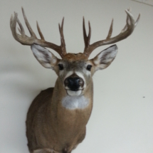 Robert Pica S Dakota Whitetail
