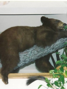 Small Bear Laying on Limb
