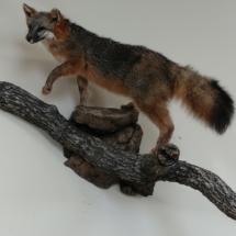 Mike Baloga Gray Fox