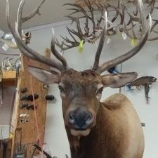 Ed Kochanski Colorado Elk