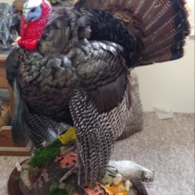 John Ocwieja Strut Turkey side view