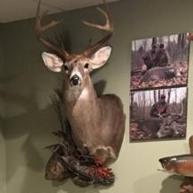 Ken Collins Deer 2017