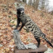 Arican Civet Gene B.jpeg