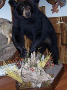 Mark Mitchko Bear