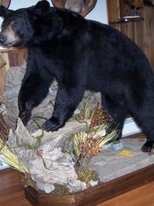Mark Mitchko Bear#2