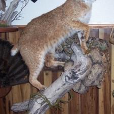 Mark Mitchko Bobcat